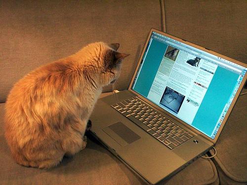 comment avoir plus de commentaires sur son blog